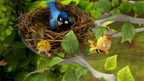 Maja und Willi flüchten aus dem Vogelnest. | Rechte: ZDF/Studio100 Animation