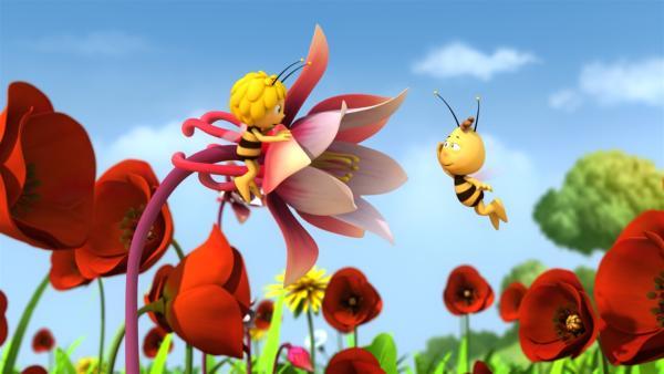 Majas Blume gefällt Willi sehr. | Rechte: ZDF/Studio100 Animation