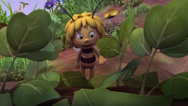 Majas Blume gedeiht prächtig. | Rechte: ZDF/Studio100 Animation