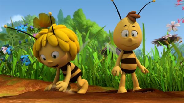Maja vergräbt Samen in der Erde.   Rechte: ZDF/Studio100 Animation