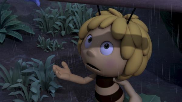 Regen! Jetzt kann Majas Blume wachsen. | Rechte: ZDF/Studio100 Animation