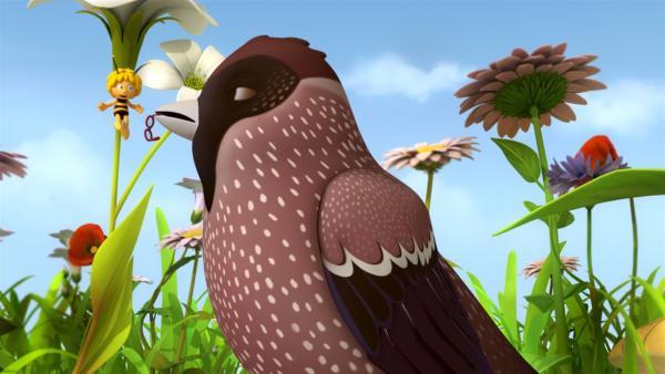 Wofür braucht eine Meise Walters Brille? | Rechte: ZDF/Studio100 Animation