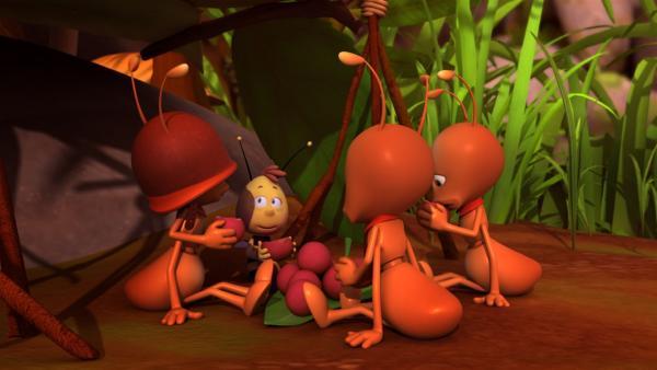 Bei den Ameisen fühlt sich Willi wohl. | Rechte: ZDF/Studio100 Animation