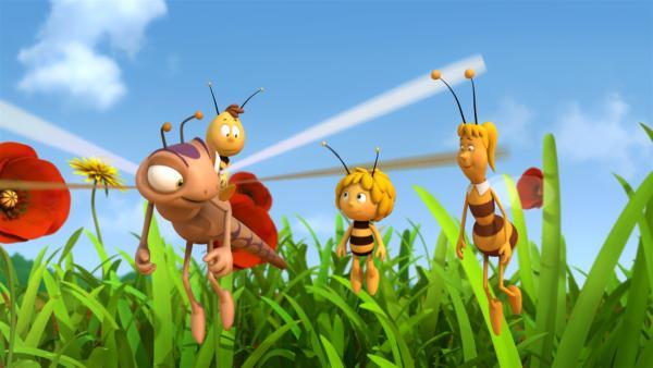 Auf die Libellenluftpost ist Verlass.   Rechte: ZDF/Studio100 Animation