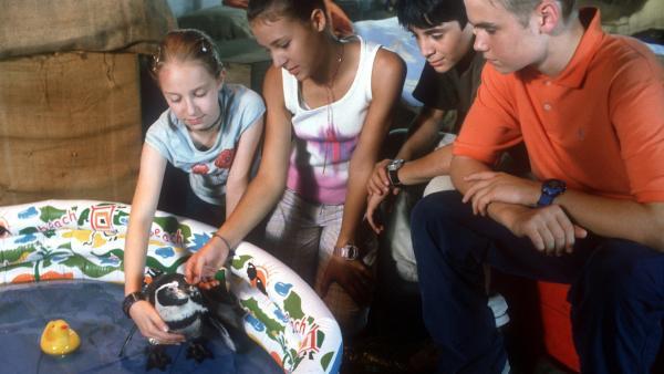 Die Pfefferkörner (v.l.: Aglaja Brix, Anna-Elena Herzog, Ihsan Ay, Julian Paeth) rätseln: Wer könnte an dem kleinen Pinguin Freddie Interesse haben? | Rechte: NDR/Baernd Fraatz