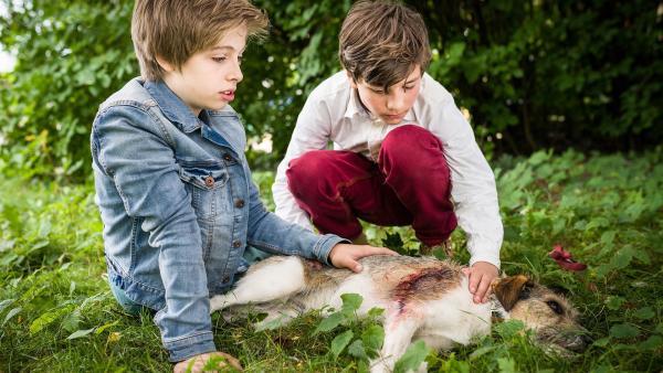 Till (Otto von Grevenmoor) und Ramin (Jann Piet) machen sich große Sorgen um Hündin Socke. | Rechte: NDR/Boris Laewen