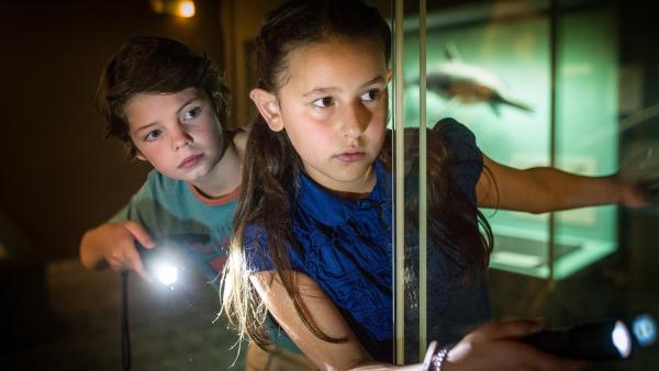 Timo (Malon Stahlhuth) und Jale (Ava Sophie Richter) auf ihrem nächtlichen Streifzug durch das zoologische Museum.   Rechte: NDR/Boris Laewen