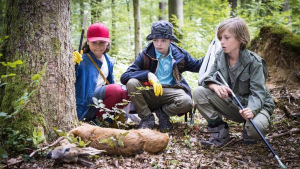 Jale (Ava Sophie Richter, li.), Timo (Malon Stahlhut, Mitte) und Jonas (Linas Mahncke, re.) machen einen grausigen Fund im Wald... | Rechte: NDR/Boris Laewen