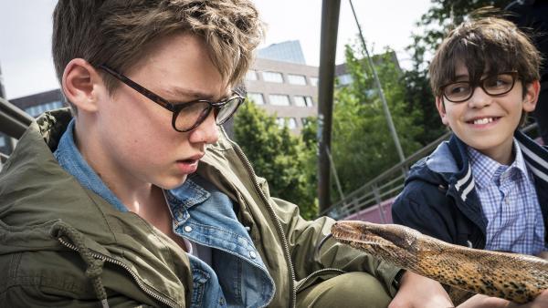 So ein richtiger Schlangenfreund wird Benny (Ruben Storck, links) trotz des guten Zuredens von Gisbert (Tarik Sanli) nicht. | Rechte: NDR/Boris Laewen