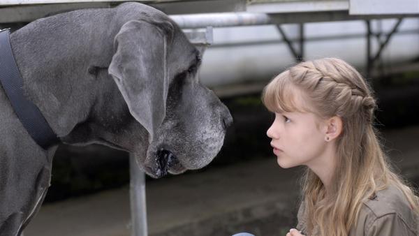 Lilly (Laura Gabriel) machte eine unliebsame Bekanntschaft mit einem Wachhund. | Rechte: NDR/Romano Ruhnau