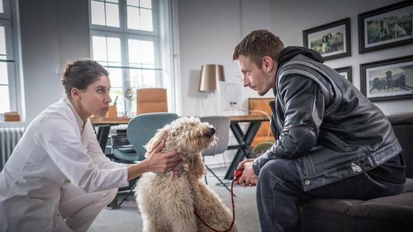 Die Tierärztin begutachtet den Hund. | Rechte: NDR/Studio HH Foto: Boris Laewen