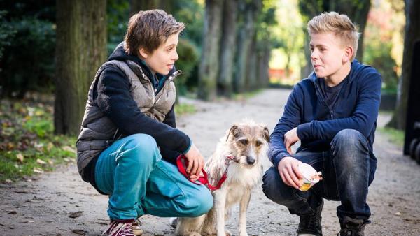 Till (Otto von Grevenmoor, links) und Tom (Vincent Grages) hocken neben Hündin Socke. | Rechte: NDR/Studio HH Foto: Boris Laewen