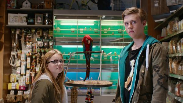 Floor (Bobbie Mulder) und Kees (Ole Kroes) in der Tierhandlung, in der Kees dem Papagei ein Schimpfwort beibringt. | Rechte: NDR/NL Film