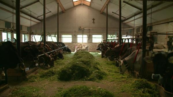 Die Kuh Lena geht heute auf eine spannende Reise. Sie wird mit ihrer Herde den Sommer auf einer Alpe im Allgäu verbringen. | Rechte: WDR