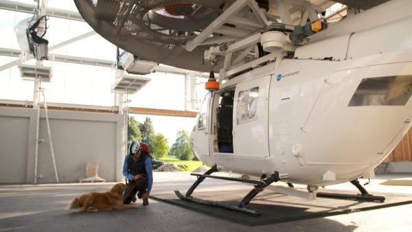 Lawinenhund Chilli und ihr Trainer Günther üben gemeinsam das Abseilen vom Helikopter. | Rechte: WDR