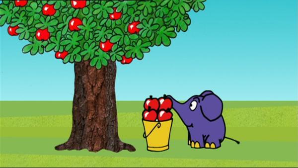 Der Elefant mag frisches Obst. | Rechte: WDR