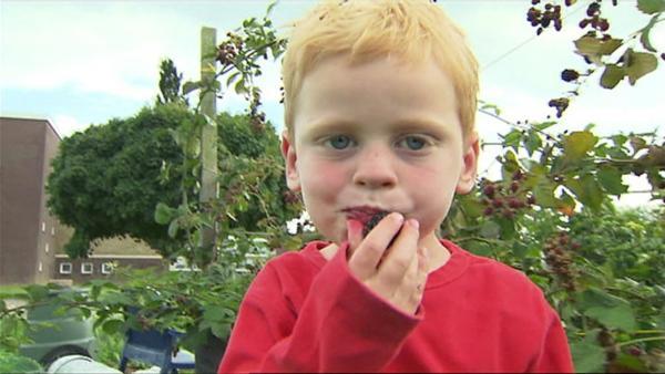 Peter geht mit seinem Opa in den Garten und erntet leckere Brombeeren. | Rechte: WDR