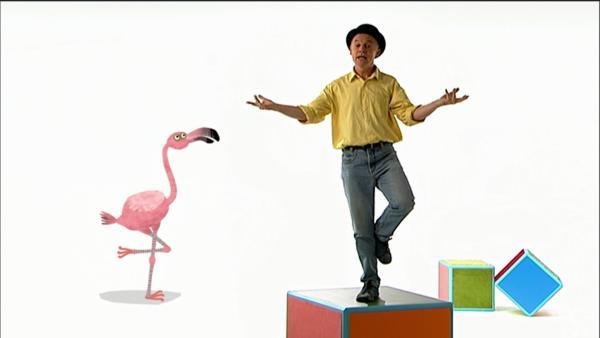 Im Flamingo-Lied erklärt Robert, warum diese Vögel auch manchmal auf zwei Beinen stehen. | Rechte: WDR