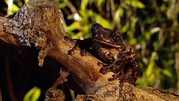 Ein geheimnisvolles Tier sitzt ganz still im Wald. Welches Tier das wohl sein mag? | Rechte: WDR