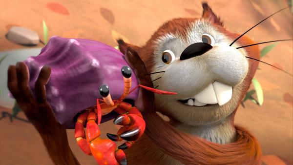 Das Eichhörnchen Chips freut sich – es hat endlich eine Seenuss gefunden! Oder wie heißt das runde harte Teil in seiner Pfote?   Rechte: ZDF/Fizzy Productions ltd.