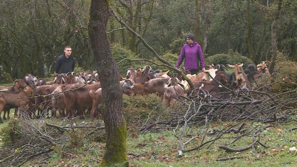 Diesmal müssen wilde Ziegen zusammengetrieben werden. Das ist gar nicht so leicht. | Rechte: hr/E+U TV Film- und Fernsehproduktion