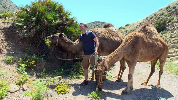 Coach Tobi hat Kamele mitgebracht. Die sollen ja ganz schön störrisch sein. | Rechte: hr/E+U TV Film- und Fernsehproduktion