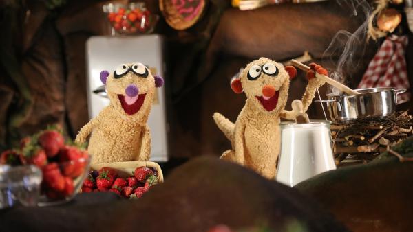 Die Erdmännchen beim Marmeladen kochen. | Rechte: NDR/bigSmile