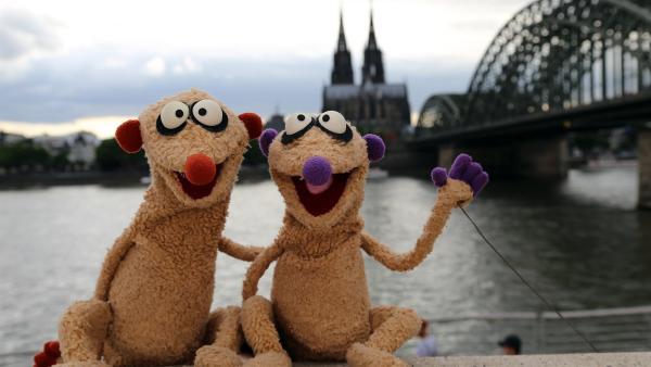 Gerade in Köln angekommen, geraten Jan & Henry direkt in einen neuen Kriminalfall. | Rechte: NDR/bigSmile