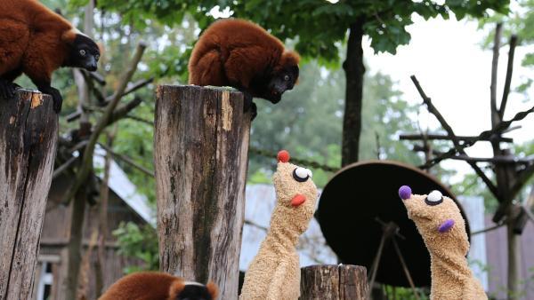 Jan & Henry ermitteln im Zoo. | Rechte: bigSmile/NDR
