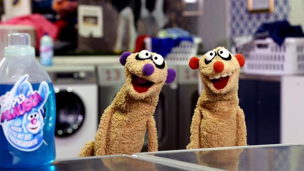 Jan & Henry im Waschsalon. | Rechte: NDR/ bigSmile