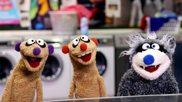Jan & Henry treffen im Waschsalon einen Waschbär. | Rechte: NDR/ bigSmile