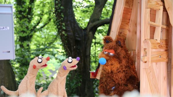 Die Erdmännchen treffen einen Bär. | Rechte: NDR/bigSmile