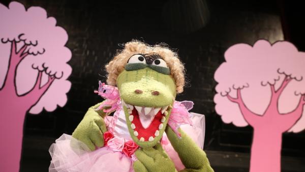 Krokodella will die Hauptrolle in der Ballettaufführung. | Rechte: NDR/bigSmile