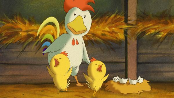 Bei einem Streit zweier Hennen um zwei Eier kann das Problem endlich gelöst werden, als die Küken schlüpfen. | Rechte: WDR/MotionWorks GmbH