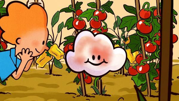 Vor den roten Tomaten sieht Huu plötzlich ganz bunt aus.   Rechte: SWR/NORMAAL