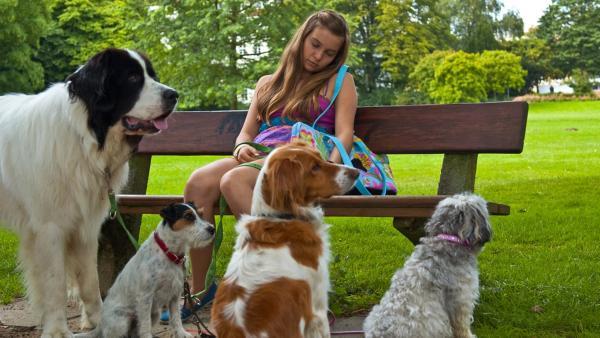 Ally mit vielen Hunden im Park | Rechte: NDR/Southern Star