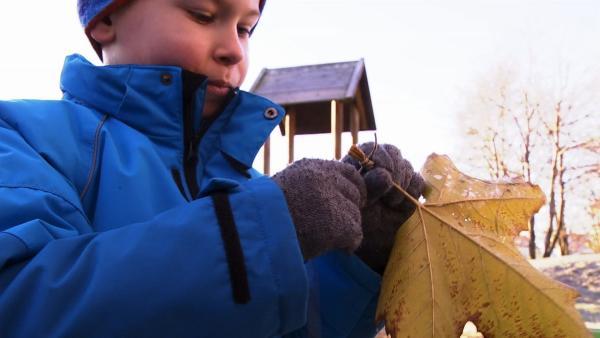 Eric überprüft seinen Blätterdrache. | Rechte: KiKA