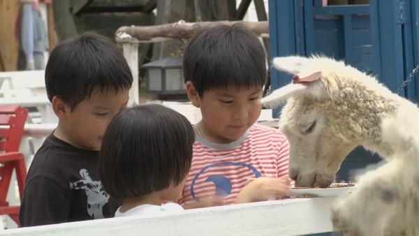 Die Kinder locken Tiere an. | Rechte: KiKA/Motion Works GmbH