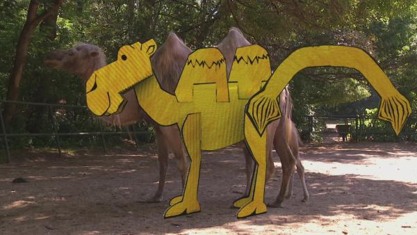 Ein gelb angemaltes Steckkamel steht vor einem echten Kamel im Zoogehege. | Rechte: KiKA