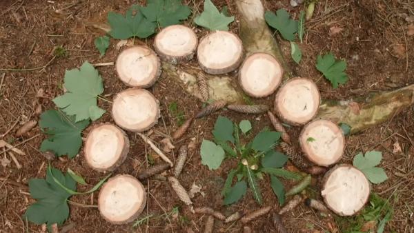 Zwei Mädchen legen im Wald ein rundes Mandala aus Tannenzapfen, Blättern und Tannenzweigen. | Rechte: KiKA