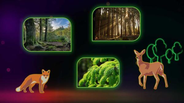 Das Wald-Quiz | Rechte: KiKA/Colourbox.com