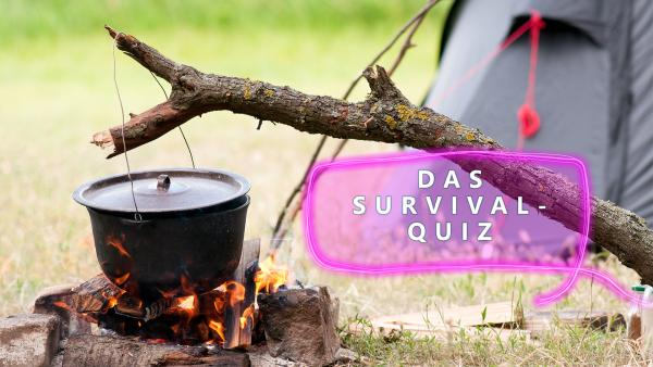 Survival Quiz | Rechte: colourbox.com