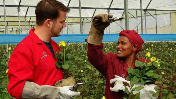 Felix und Catherine schneiden die Rosen ab. Die Rosen sollten bereits eine Blüte haben.  | Rechte: KiKA/Frank Feustle