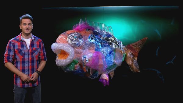 Viele Tonnen Plastikmüll landen im Meer. Fische fressen die winzigen Plastikpartikelchen. Auch wir essen Plastik, wenn wir Fisch verzehren. | Rechte: KiKA