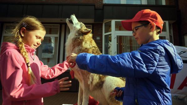 Zukunftsmacher Henrik und seinde Freunde finden heraus, wie der Wolf wirklich ist.   Rechte: KiKA