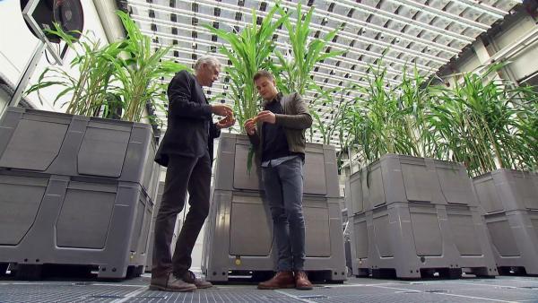Felix trifft den Pflanzenforscher Thomas Altmann, der an neuen Pflanzensorten forscht, die mit den veränderten Wetterbedingungen mithalten können. | Rechte: KiKA
