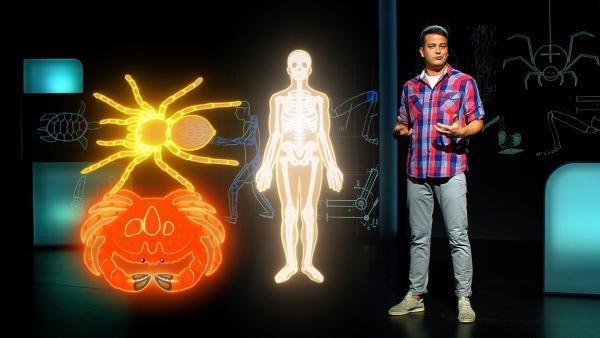 Exoskelette sind Roboterteile für Menschen. Die Idee dazu kommt aus der Tierwelt. Auch Krebse und Spinnen besitzen Exoskelette. | Rechte: KiKA