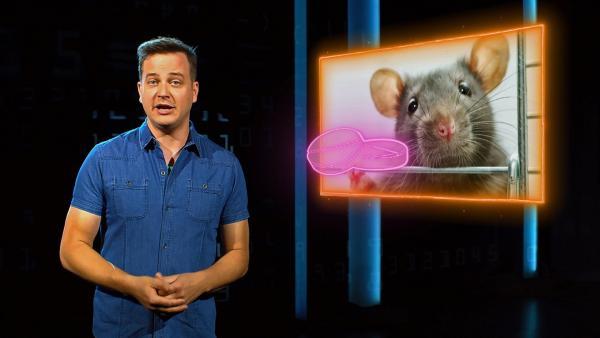 Eine Zukunft ohne Tierversuche - geht das überhaupt? | Rechte: KiKA