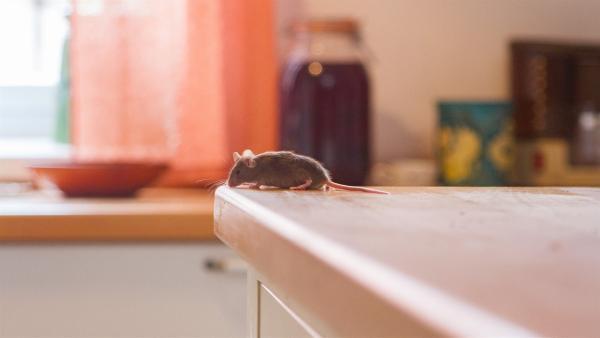 Eine Maus in der Küche bereitet Opa Karl große Angst. | Rechte: KiKA/Kinderfilm GmbH 2017