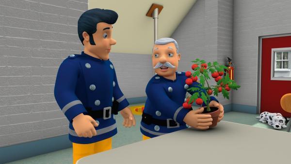 Hauptfeuerwehrmann Steeles ganzer Stolz - seine Tomatenpflanze für den Gemüsewettbewerb   Rechte: KiKA/HIT Entertainment